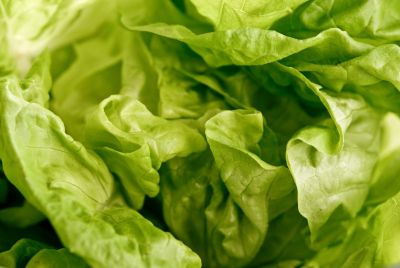 Close up of whole butter lettuce  credit: Marie-Louise Avery / thePictureKitchen / TopFoto, Image: 81918355, License: Rights-managed, Restrictions: , Model Release: no, Credit line: Profimedia, thePictureKitchen