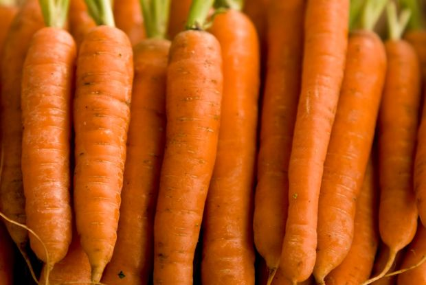 Close up of carrots lined up.  credit: Marie-Louise Avery / thePictureKitchen / TopFoto, Image: 81920160, License: Rights-managed, Restrictions: , Model Release: no, Credit line: Profimedia, thePictureKitchen