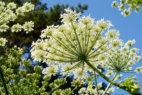 7633409 - forest plants with white flowers