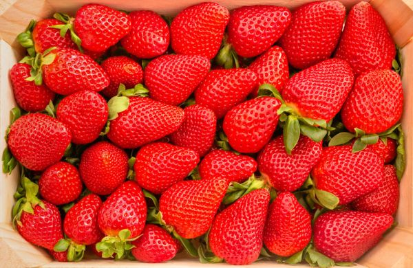 37462688 - closeup of tasty spanish strawberries freshly collected on a wooden box view from above