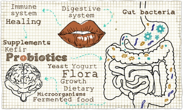 55356341 - illustration about the digestive system
