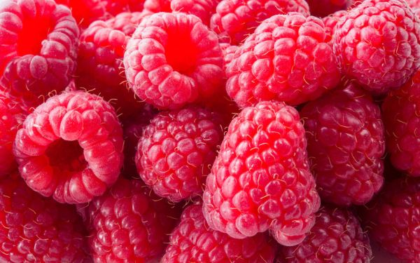 54252924 - fresh raspberry. red background