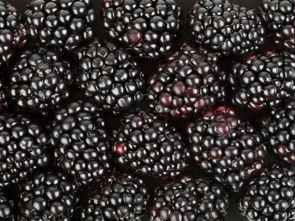 10078224 - group of blackberry - abstract food background