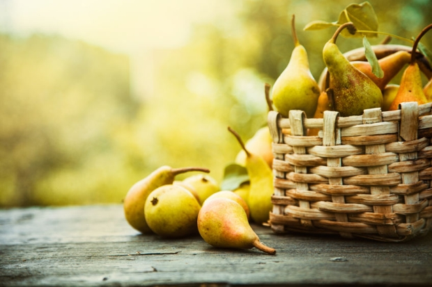 44693413 - autumn nature concept. fall pears on wood. thanksgiving dinner
