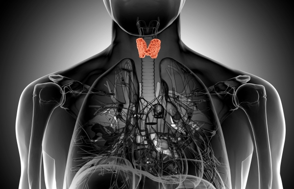 28465930 - male thyroid gland  anatomy in x-ray view
