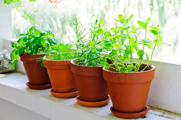 13968872 - pots with fresh green herbs on balcony
