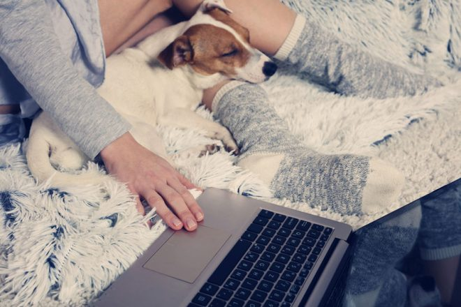 Woman in cozy home wear relaxing at home with sleeping dog Jack Russel terrier, using laptop. Soft, comfy lifestyle.