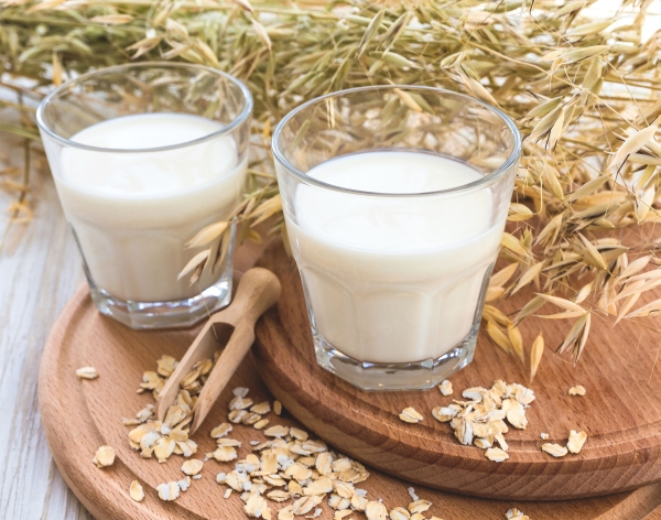 Two glasses of milk and oat spikelets on rustic background.